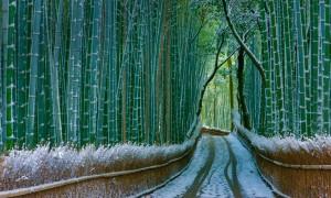 KyotoBamboo ROW