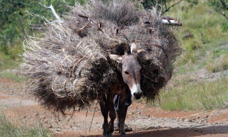 empreendedor como burro de carga.