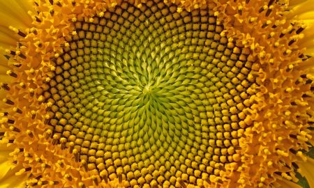 Golden-Ratio-Photography-1000×605